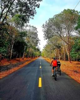 May be an image of bicycle, road, tree and nature