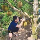 May be an image of durian and outdoors