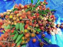 May be an image of fruit